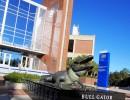 UF Gator statue