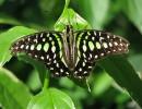UF butterfly rainforest.