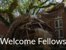 Welcome fellows gator statue