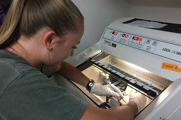 Member of Dore lab working