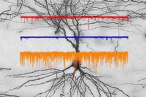 Neuroscience research
