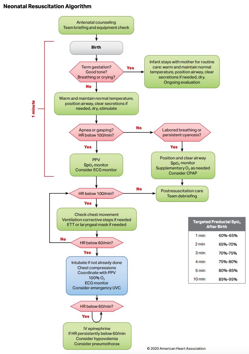 Neonatal Resuscitation Algorithm
